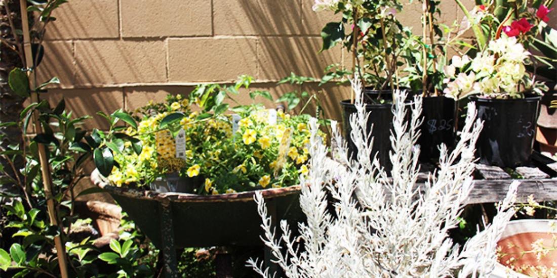 Atrium Gardens Apartments Las Vegas