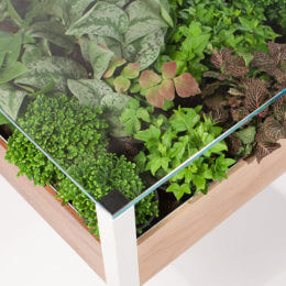 Turn your entertaining area into a green space with a Living Table